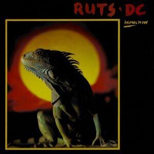 Ruts D.C. 歌手頭像