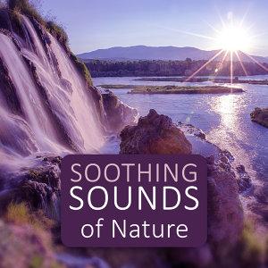 Universe of Nature Orchestra 歌手頭像