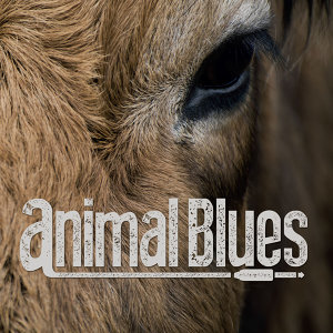 Animal Blues 歌手頭像