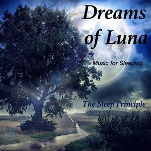 The Sleep Principle 歌手頭像