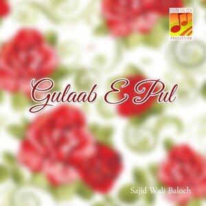 Sajid Wali Baloch 歌手頭像