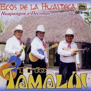 Trio Tamalín 歌手頭像