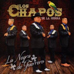 Los Chapos de la Sierra 歌手頭像
