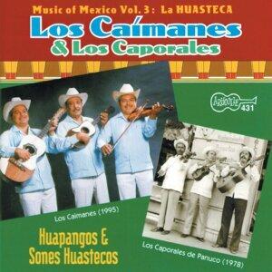 Los Caimanes & Los Caporales de Panuco 歌手頭像