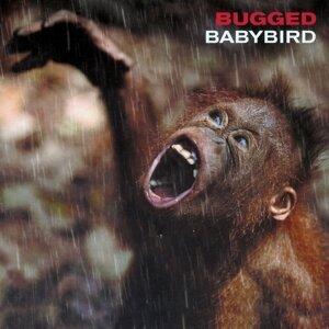 Babybird 歌手頭像