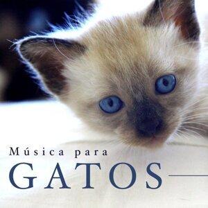Cat Whisper & Asian Zen Spa Music Meditation & Sonidos de la Naturaleza Relax Foto artis