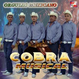 Cobra Musical Foto artis