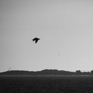 Oceans of the Damned Foto artis