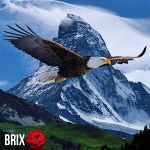 Brix Rosa Foto artis