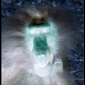 Cool Monkey Foto artis