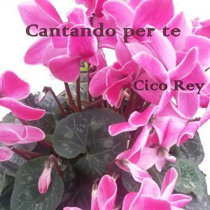 Cico Rey Foto artis