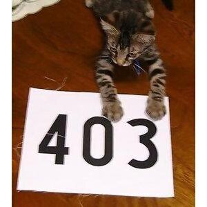 403 (403) Foto artis