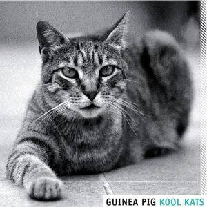 Guinea Pig! Foto artis