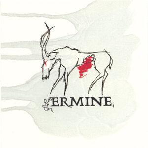 Ermine Foto artis
