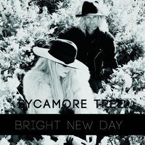 Sycamore Tree Foto artis