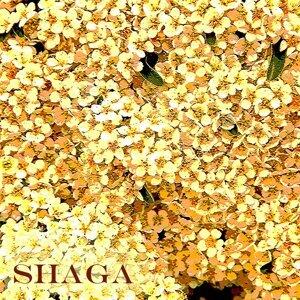 Shaga Foto artis
