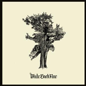 The White Bark Pine Foto artis