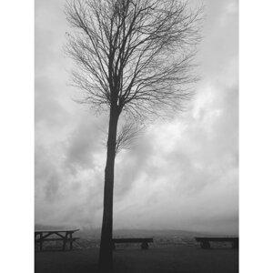 onetree (onetree) Foto artis