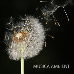 Musica Ambient Orchestra
