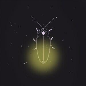 The Lightning Bug Situation Foto artis