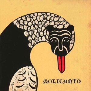 Molicanto Foto artis