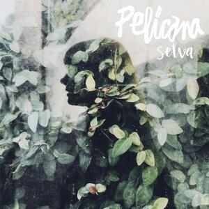 Pelicana Foto artis