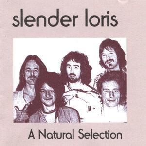 Slender Loris Foto artis