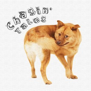 Stray Dogs Foto artis