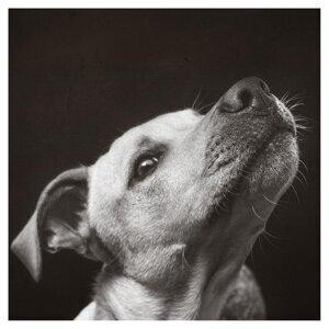 A Dog Named Bob Foto artis