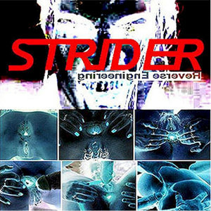 The Striders 歌手頭像