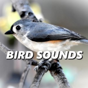 Bird Sounds 歌手頭像