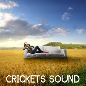 Crickets Sound Orchestra 歌手頭像