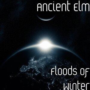 Ancient Elm 歌手頭像
