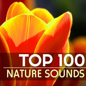 Nature Sounds Spa Therapy