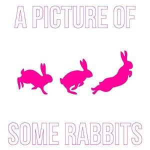 Some Rabbits 歌手頭像