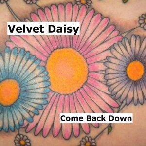 Velvet Daisy 歌手頭像