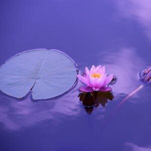 Spa Music, Lullabys Baby Club, Asian Zen Meditation 歌手頭像