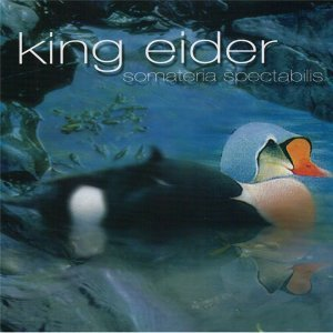 King Eider 歌手頭像