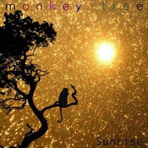 Monkey Tree 歌手頭像