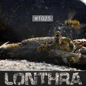 Lonthra 歌手頭像