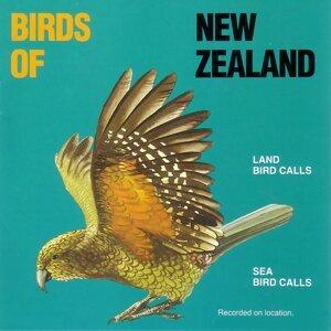 Birds of New Zealand 歌手頭像