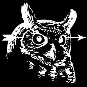 Owls and Arrows 歌手頭像