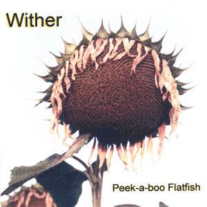 Peek-a-boo Flatfish 歌手頭像