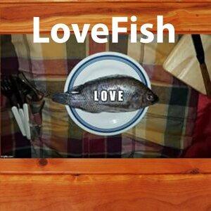 Lovefish 歌手頭像