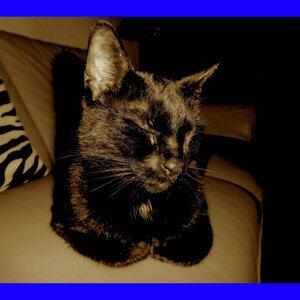 Patty the Black Cat 歌手頭像