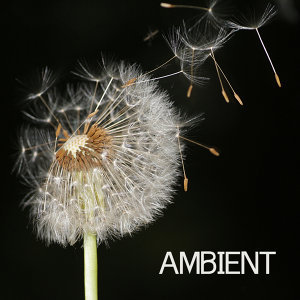 Ambient 歌手頭像