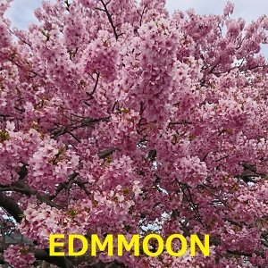 Edmmoon