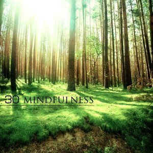 Sounds of Nature White Noise for Mindfulness Meditation and Relaxation 歌手頭像