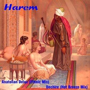 Harem 歌手頭像
