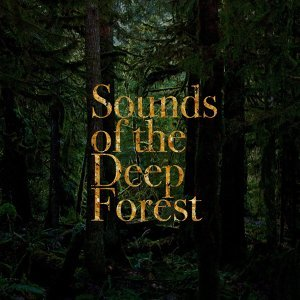 Sounds Of The Deep Forest Artist photo